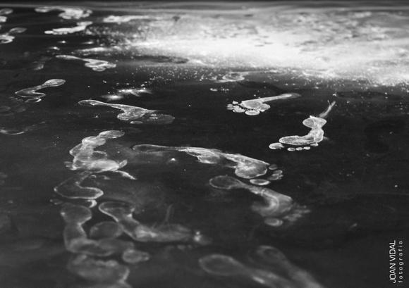 Empremtes fotografia blanc i negre black and white footprint photo